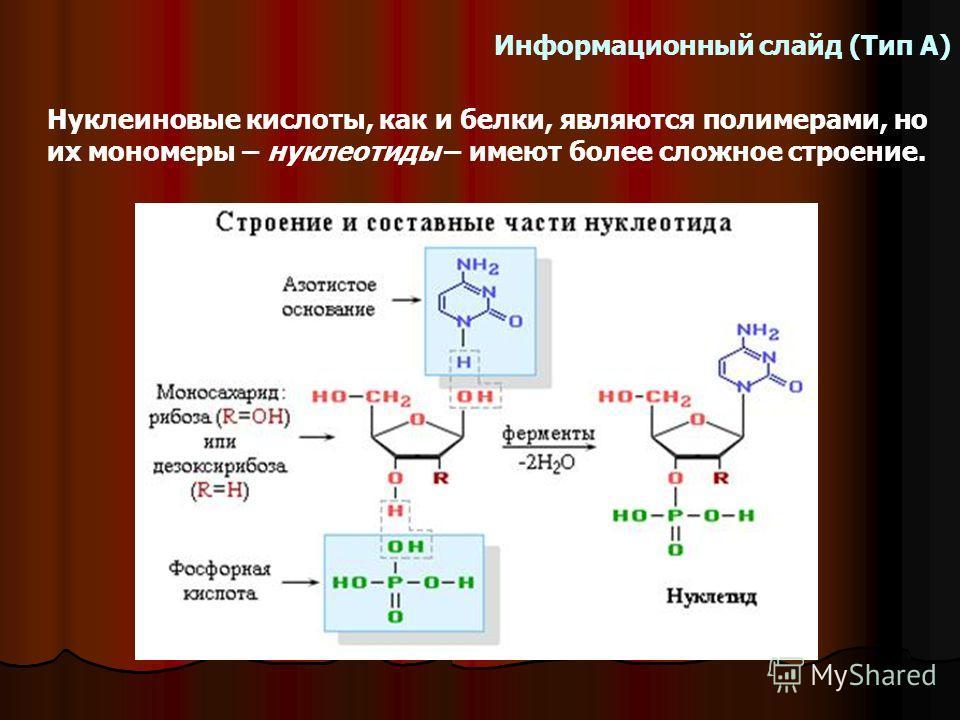 Информационный слайд (Тип А) Нуклеиновые кислоты, как и белки, являются полимерами, но их мономеры – нуклеотиды – имеют более сложное строение.