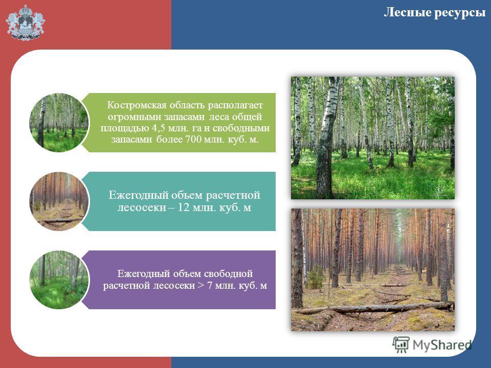 Костромская область располагает огромными запасами леса общей площадью 4,5 млн. га и свободными запасами более 700 млн. куб. м. Ежегодный объем расчетной лесосеки – 12 млн. куб. м Ежегодный объем свободной расчетной лесосеки > 7 млн. куб. м Лесные ре