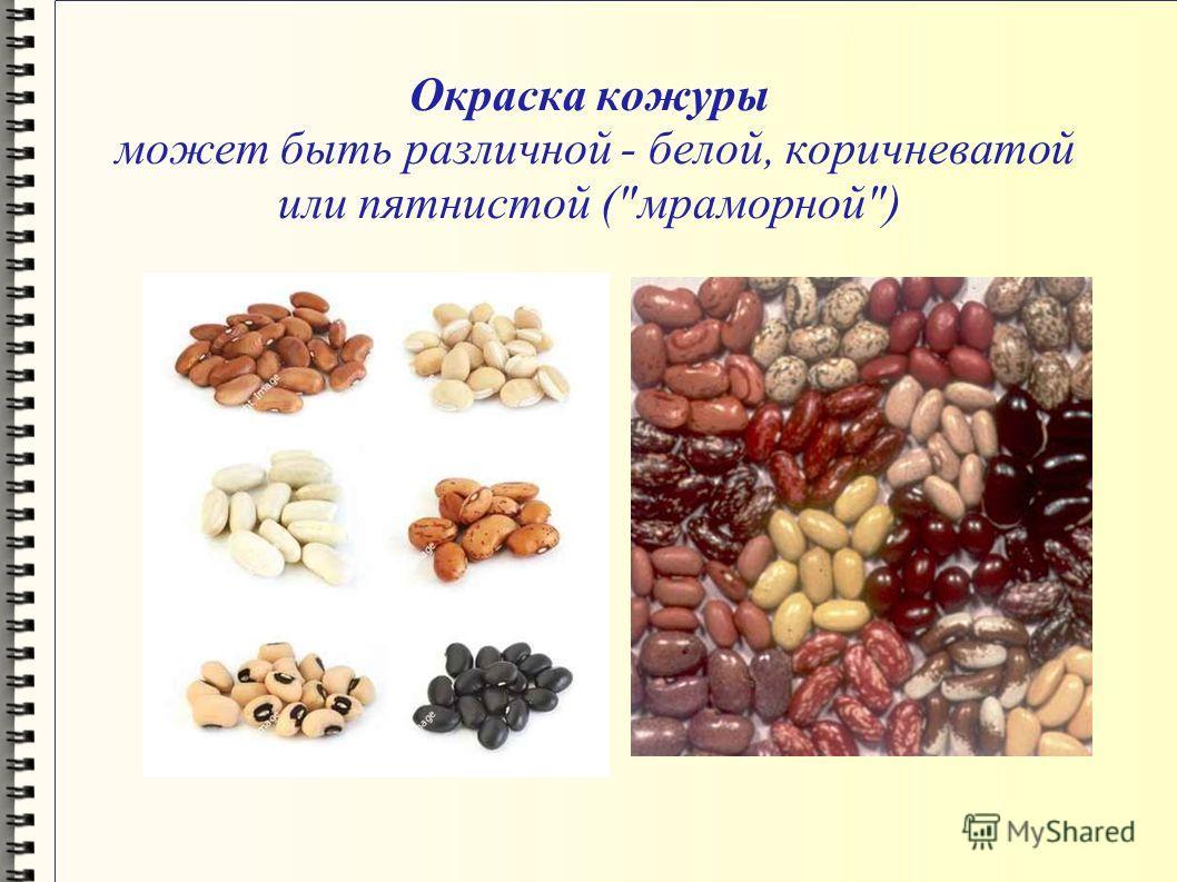 Окраска кожуры может быть различной - белой, коричневатой или пятнистой (мраморной)