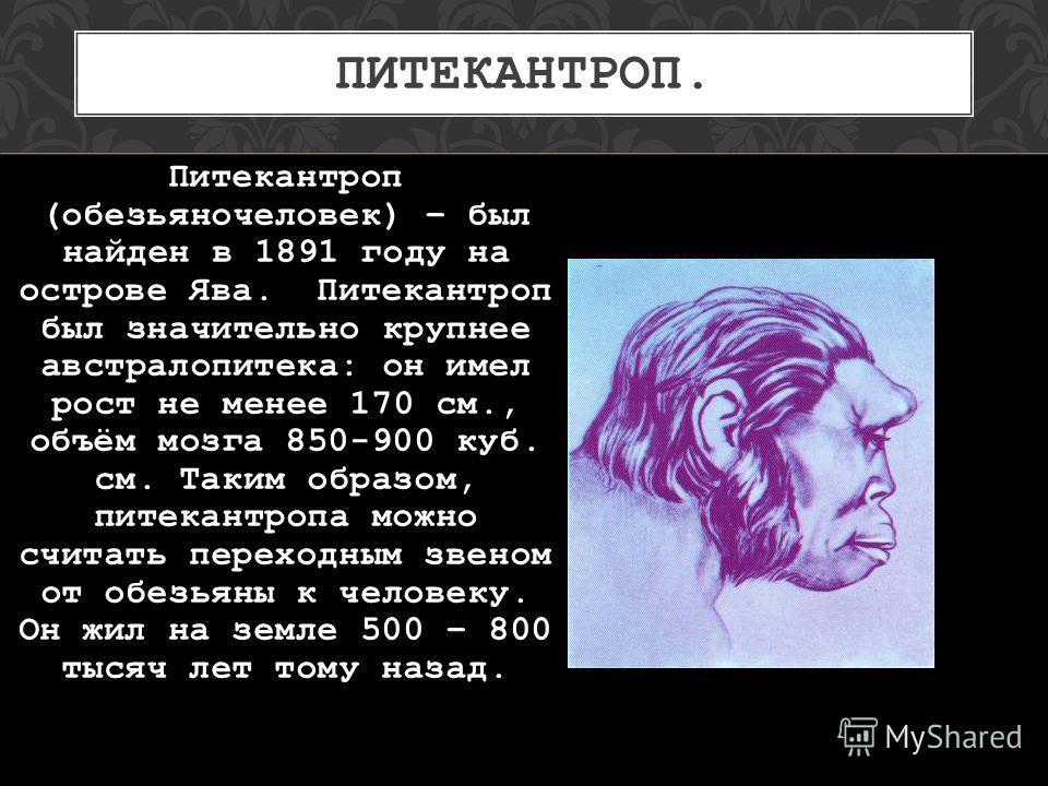 ПИТЕКАНТРОП. Питекантроп (обезьяночеловек) – был найден в 1891 году на острове Ява. Питекантроп был значительно крупнее австралопитека: он имел рост не менее 170 см., объём мозга 850-900 куб. см. Таким образом, питекантропа можно считать переходным з