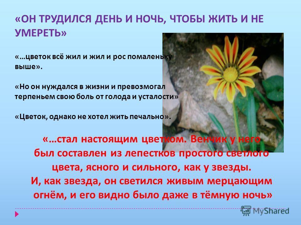 «ОН ТРУДИЛСЯ ДЕНЬ И НОЧЬ, ЧТОБЫ ЖИТЬ И НЕ УМЕРЕТЬ» «…цветок всё жил и жил и рос помаленьку выше». «Но он нуждался в жизни и превозмогал терпеньем свою боль от голода и усталости» «Цветок, однако не хотел жить печально». «…стал настоящим цветком. Венч
