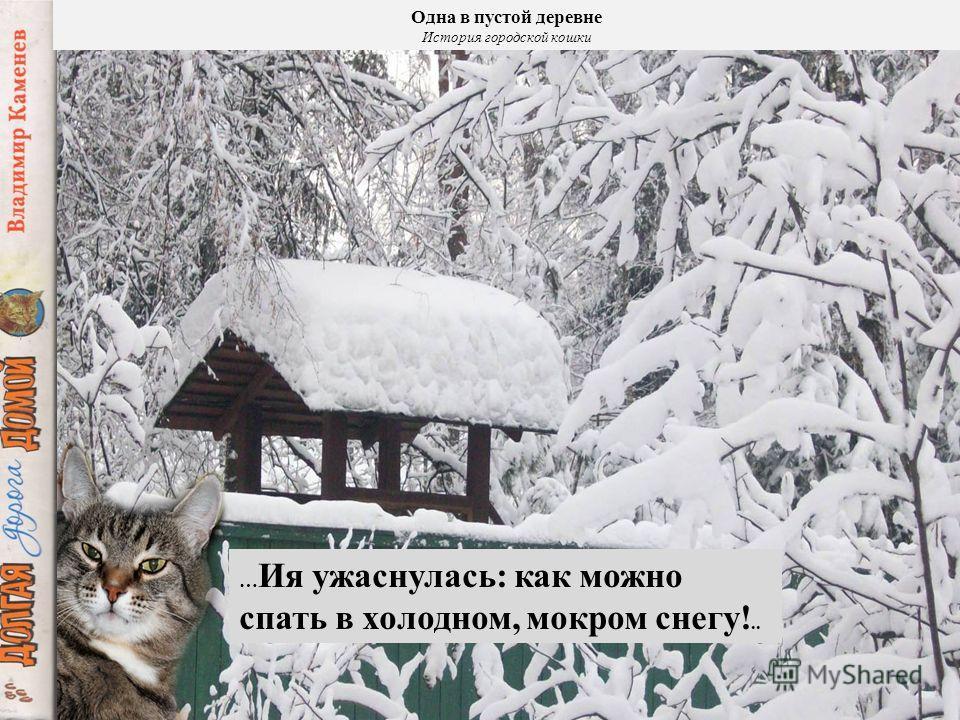 Одна в пустой деревне История городской кошки … Так домашняя питомица стала безжалостной дикой охотницей …