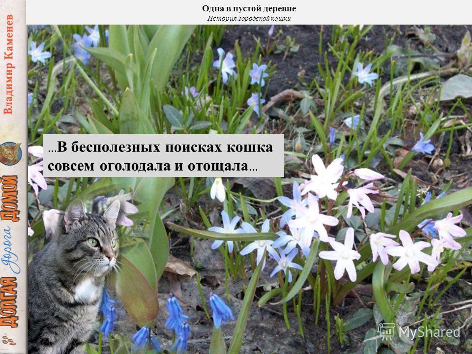 Одна в пустой деревне История городской кошки … Куда только не заносит кошку её любопытство !..