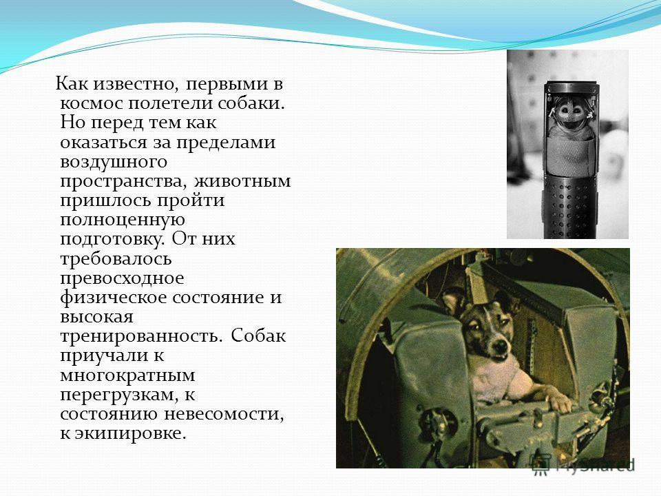 Как известно, первыми в космос полетели собаки. Но перед тем как оказаться за пределами воздушного пространства, животным пришлось пройти полноценную подготовку. От них требовалось превосходное физическое состояние и высокая тренированность. Собак пр