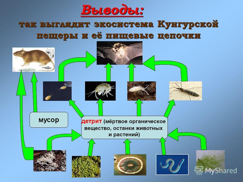 Выводы: так выглядит экосистема Кунгурской пещеры и её пищевые цепочки детрит (мёртвое органическое вещество, останки животных и растений) мусор