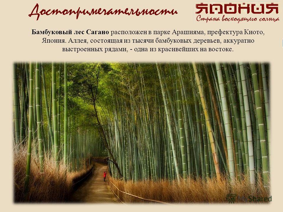Бамбуковый лес Сагано расположен в парке Арашияма, префектура Киото, Япония. Аллея, состоящая из тысячи бамбуковых деревьев, аккуратно выстроенных рядами, - одна из красивейших на востоке.