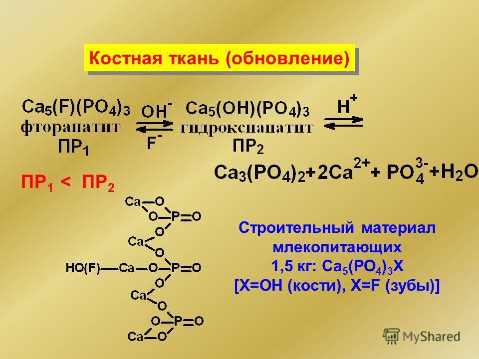 ПР 1 < ПР 2 Строительный материал млекопитающих 1,5 кг: Сa 5 (PO 4 ) 3 X [X=OH (кости), Х=F (зубы)] Костная ткань (обновление)