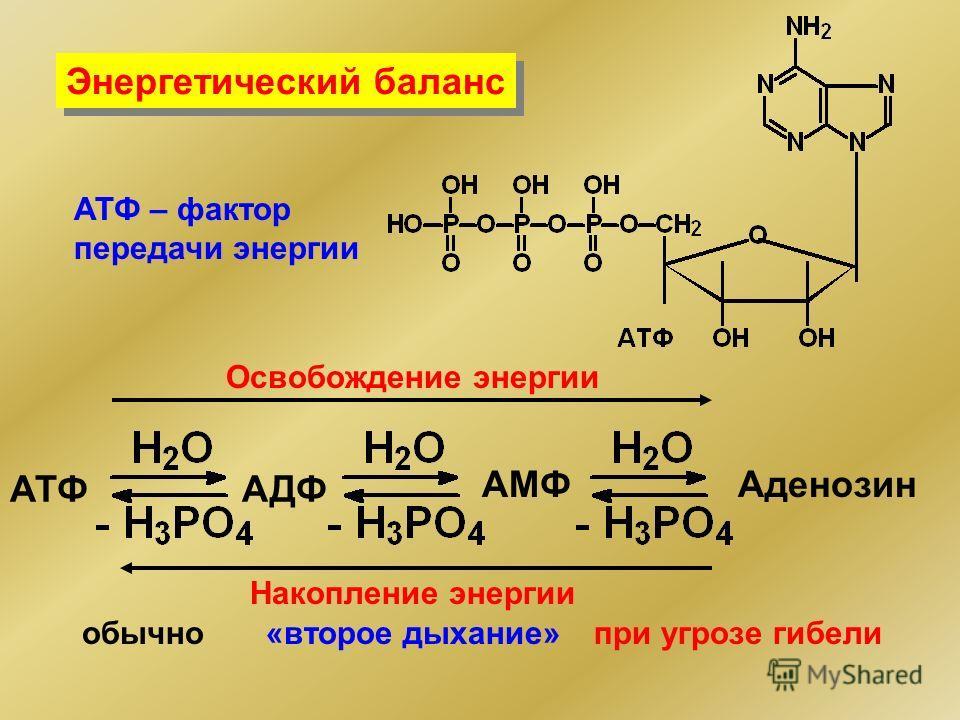 АТФАДФ АМФАденозин Освобождение энергии Накопление энергии обычно«второе дыхание»при угрозе гибели Энергетический баланс АТФ – фактор передачи энергии