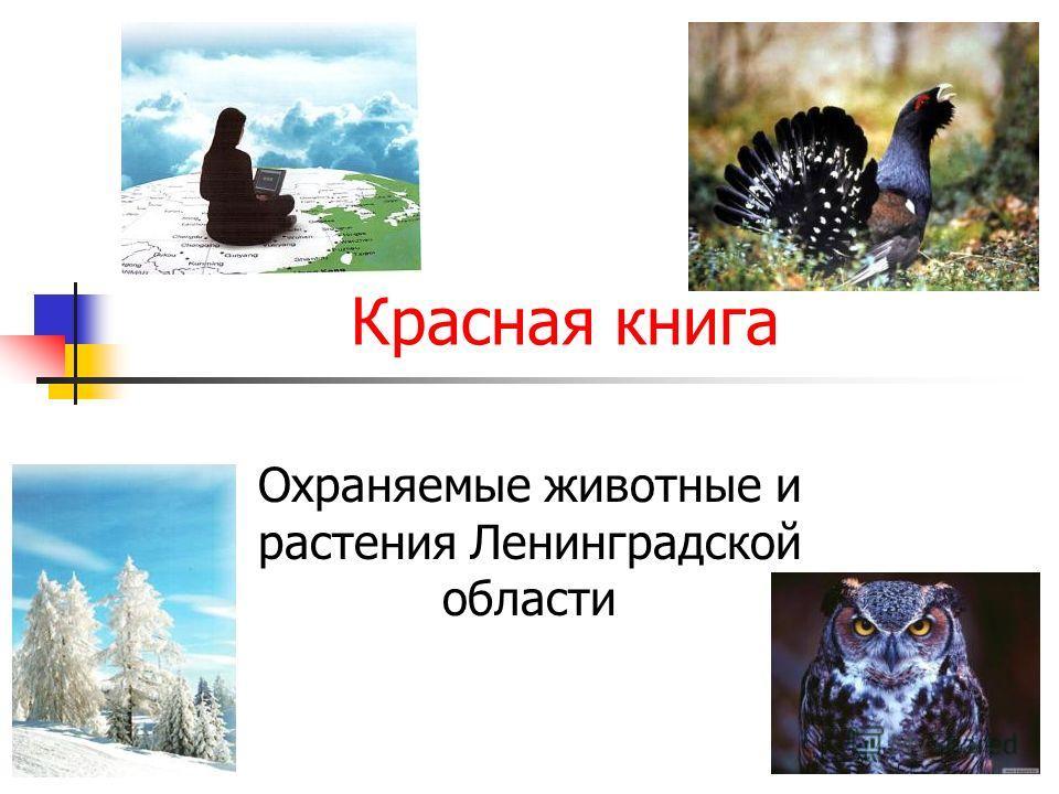 Красная книга Охраняемые животные и растения Ленинградской области