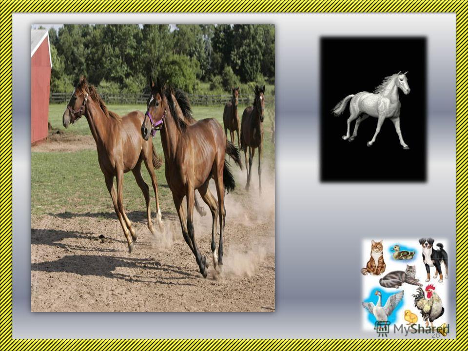 В прошлом лошадь была незаменимой помощницей человека. Она помогала крестьянину в поле, когда не было тракторов. Она перевозила людей и грузы, потому что не было автомобилей. Лошадь участвовала и в военных битвах… Современная техника во многих делах