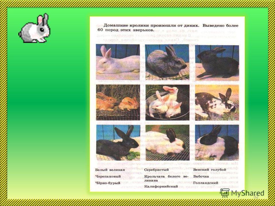 Домашние кролики произошли от диких. Выведено более 60 пород домашних кроликов. Кроликов разводят ради теплого, красивого меха, легкого пуха и вкусного мяса. Содержат кроликов в клетках. Кормят кроликов разнообразной пищей. Им дают: зеленую траву, се