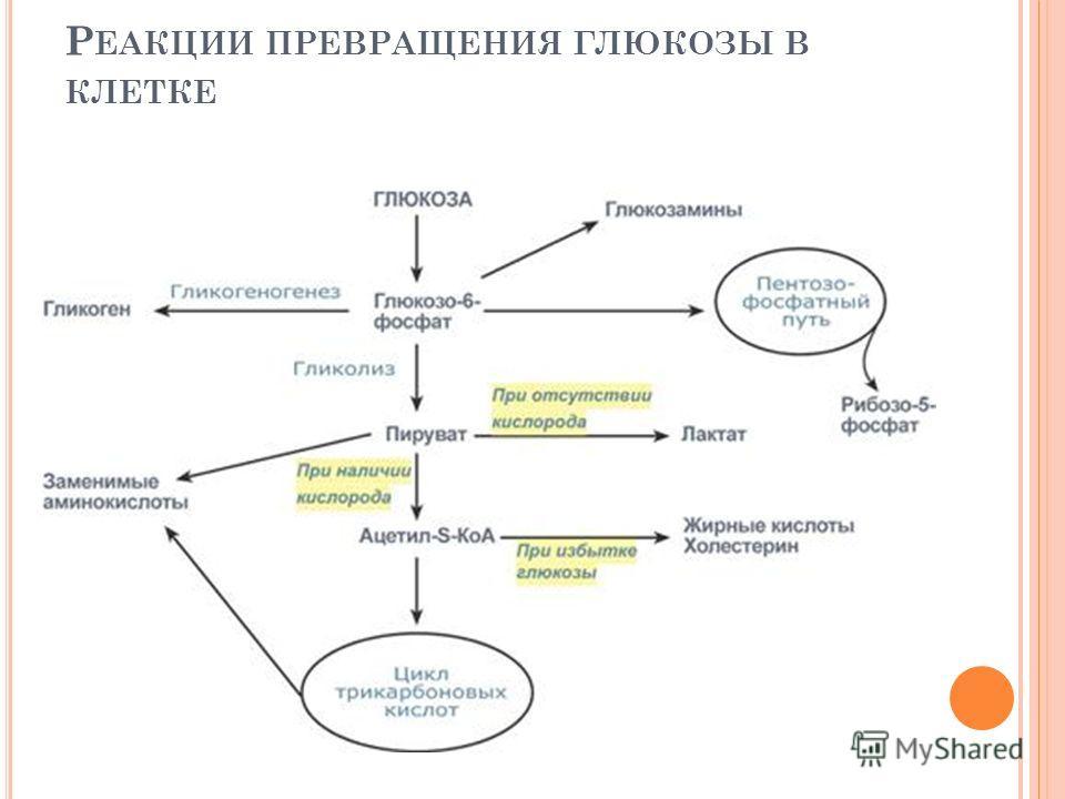 Р ЕАКЦИИ ПРЕВРАЩЕНИЯ ГЛЮКОЗЫ В КЛЕТКЕ