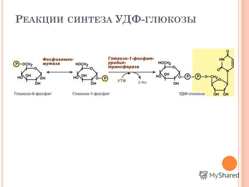 Р ЕАКЦИИ СИНТЕЗА УДФ- ГЛЮКОЗЫ