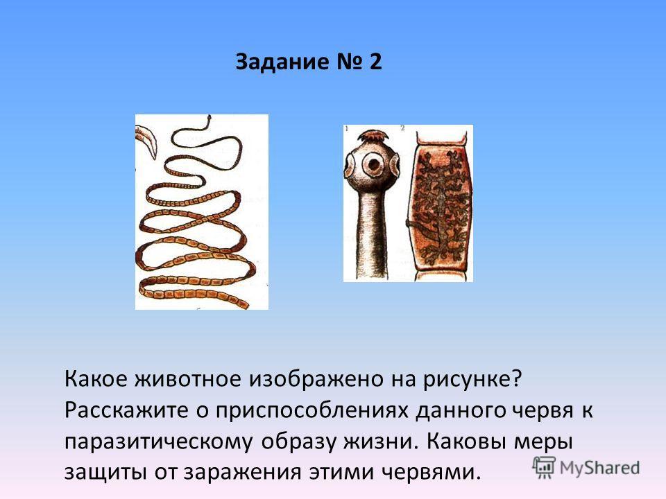 Какое животное изображено на рисунке? Расскажите о приспособлениях данного червя к паразитическому образу жизни. Каковы меры защиты от заражения этими червями. Задание 2