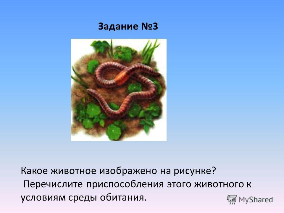 Задание 3 Какое животное изображено на рисунке? Перечислите приспособления этого животного к условиям среды обитания.