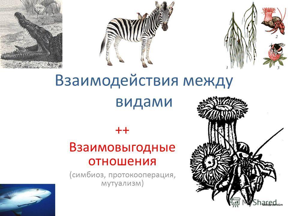 Взаимодействия между видами ++ Взаимовыгодные отношения (симбиоз, протокооперация, мутуализм)
