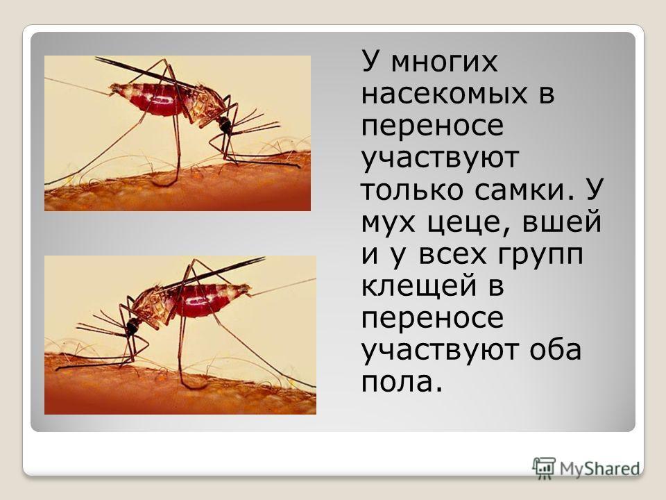 У многих насекомых в переносе участвуют только самки. У мух цеце, вшей и у всех групп клещей в переносе участвуют оба пола.