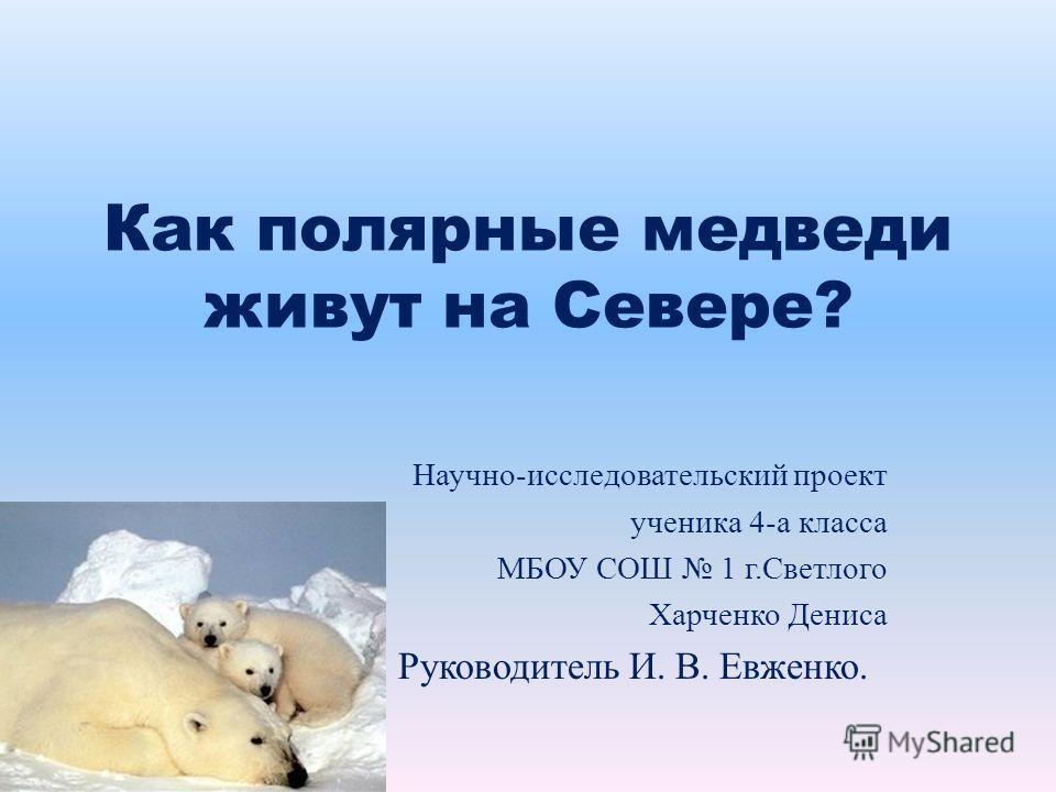 Как полярные медведи живут на Севере? Научно-исследовательский проект ученика 4-а класса МБОУ СОШ 1 г.Светлого Харченко Дениса Руководитель И. В. Евженко.