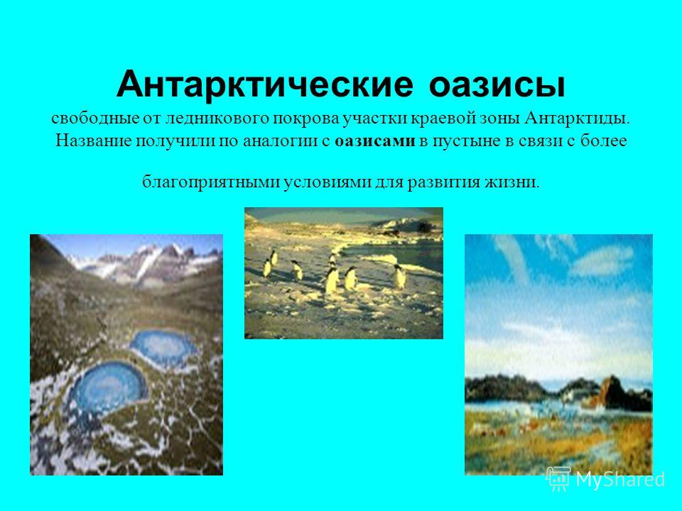 Антарктические оазисы свободные от ледникового покрова участки краевой зоны Антарктиды. Название получили по аналогии с оазисами в пустыне в связи с более благоприятными условиями для развития жизни.