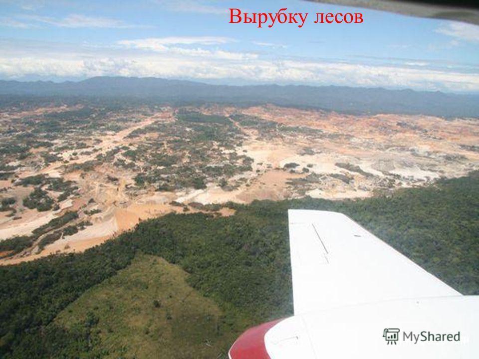 Вырубку лесов