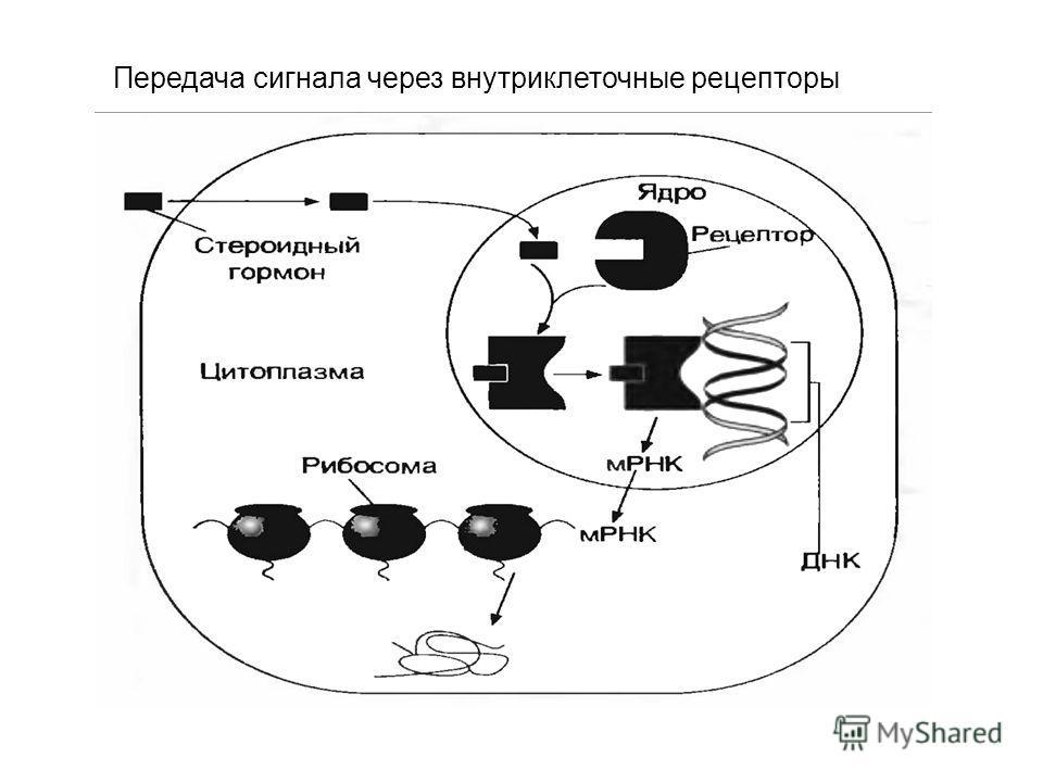 Передача сигнала через внутриклеточные рецепторы