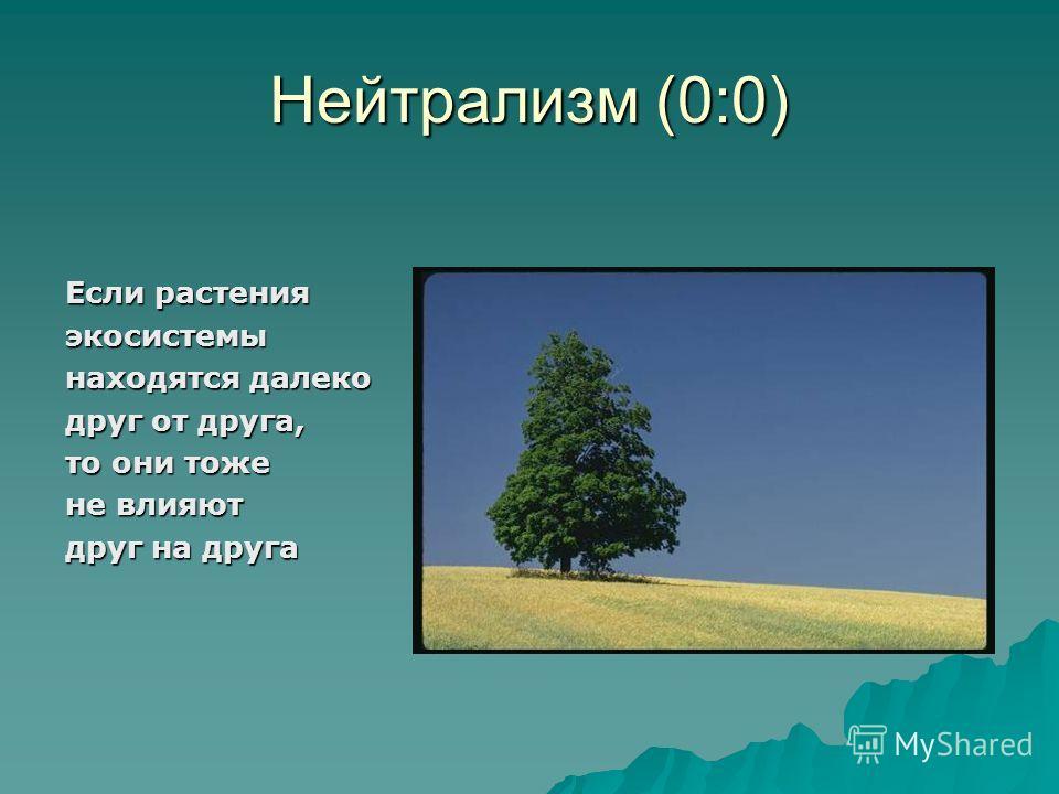 Нейтрализм (0:0) Если растения экосистемы находятся далеко друг от друга, то они тоже не влияют друг на друга