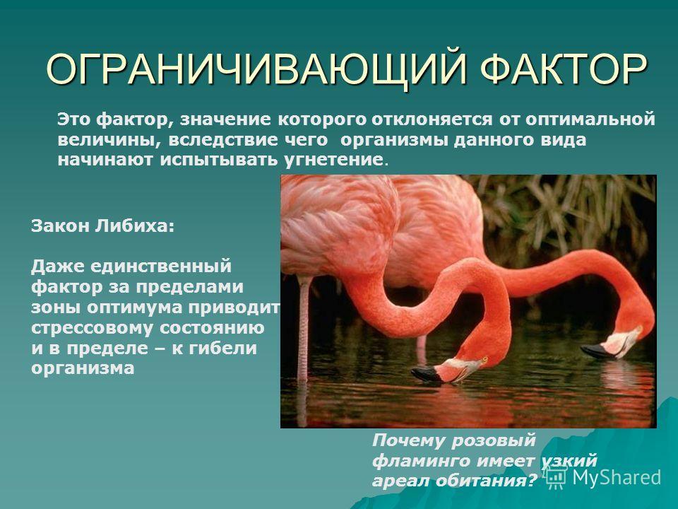ОГРАНИЧИВАЮЩИЙ ФАКТОР Это фактор, значение которого отклоняется от оптимальной величины, вследствие чего организмы данного вида начинают испытывать угнетение. Почему розовый фламинго имеет узкий ареал обитания? Закон Либиха: Даже единственный фактор