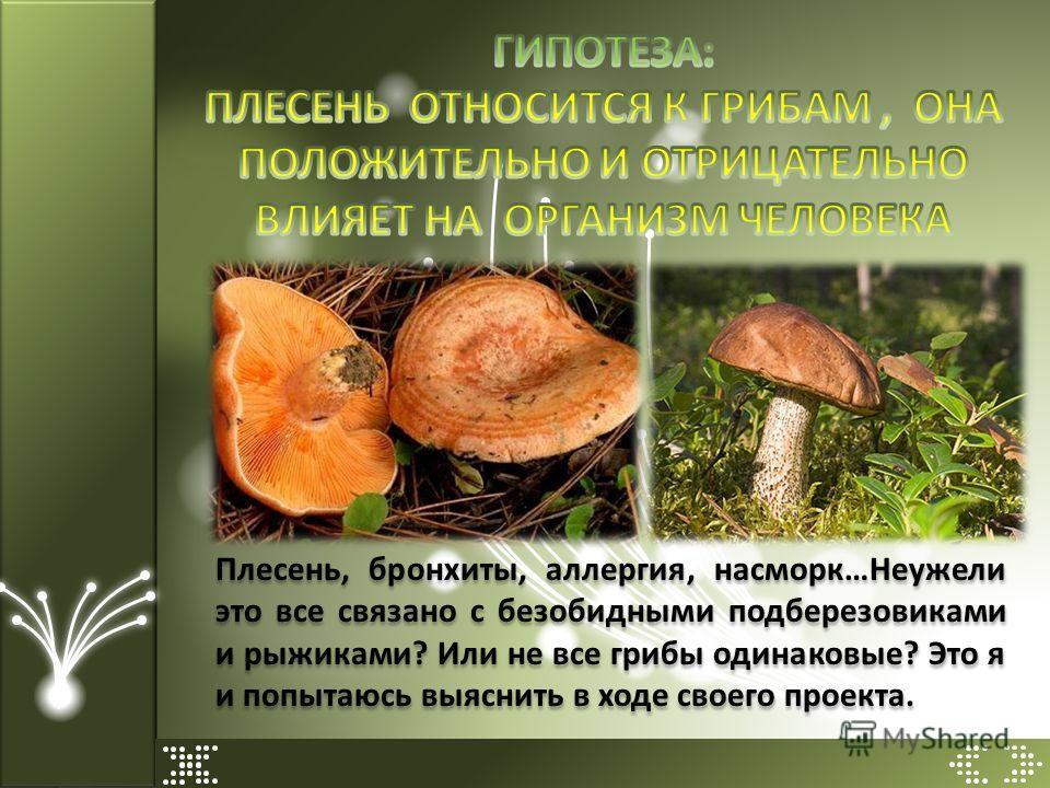 Плесень, бронхиты, аллергия, насморк…Неужели это все связано с безобидными подберезовиками и рыжиками? Или не все грибы одинаковые? Это я и попытаюсь выяснить в ходе своего проекта.