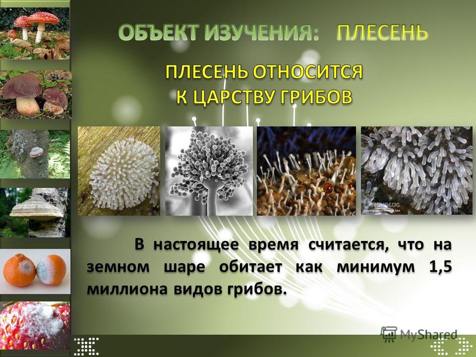 В настоящее время считается, что на земном шаре обитает как минимум 1,5 миллиона видов грибов.