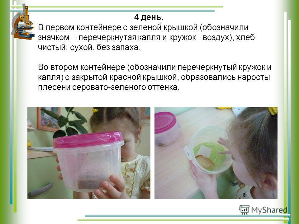 4 день. В первом контейнере с зеленой крышкой (обозначили значком – перечеркнутая капля и кружок - воздух), хлеб чистый, сухой, без запаха. Во втором контейнере (обозначили перечеркнутый кружок и капля) с закрытой красной крышкой, образовались нарост