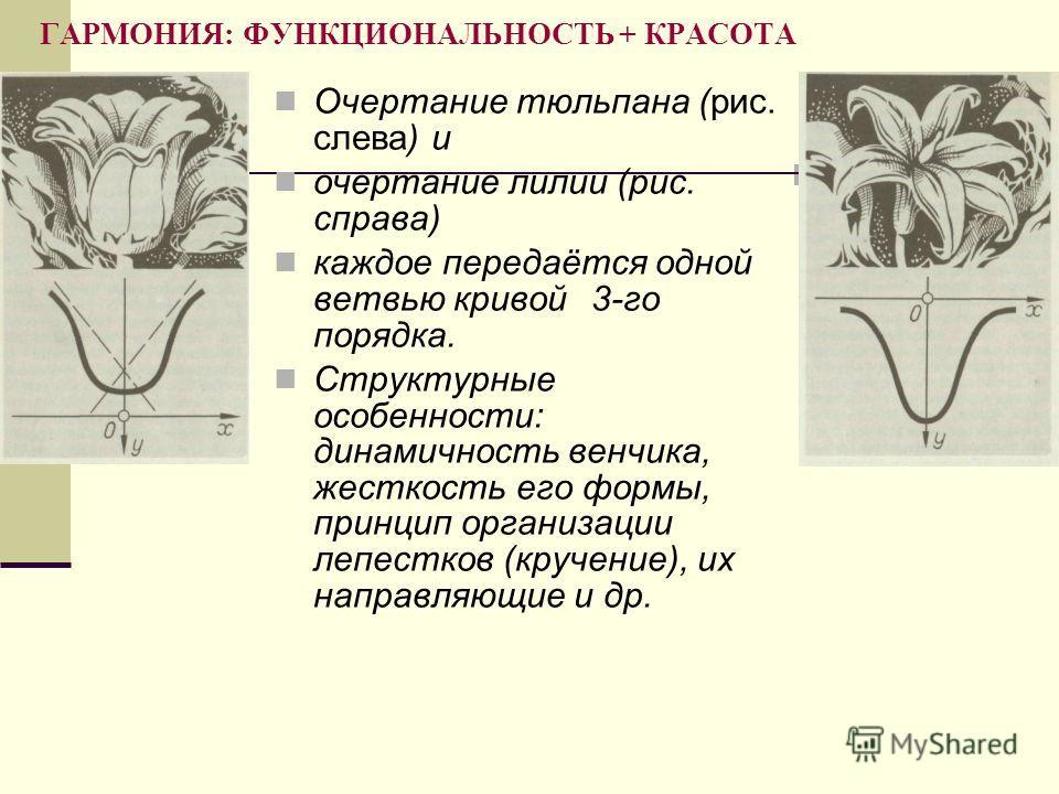 ГАРМОНИЯ: ФУНКЦИОНАЛЬНОСТЬ + КРАСОТА Очертание тюльпана (рис. слева) и очертание лилии (рис. справа) каждое передаётся одной ветвью кривой3-го порядка. Структурные особенности: динамичность венчика, жесткость его формы, принцип организации лепестков