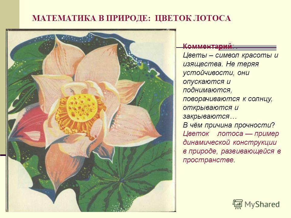 МАТЕМАТИКА В ПРИРОДЕ: ЦВЕТОК ЛОТОСА Комментарий:. Цветы – символ красоты и изящества. Не теряя устойчивости, они опускаются и поднимаются, поворачиваются к солнцу, открываются и закрываются… В чём причина прочности? Цветок лотоса пример динамической
