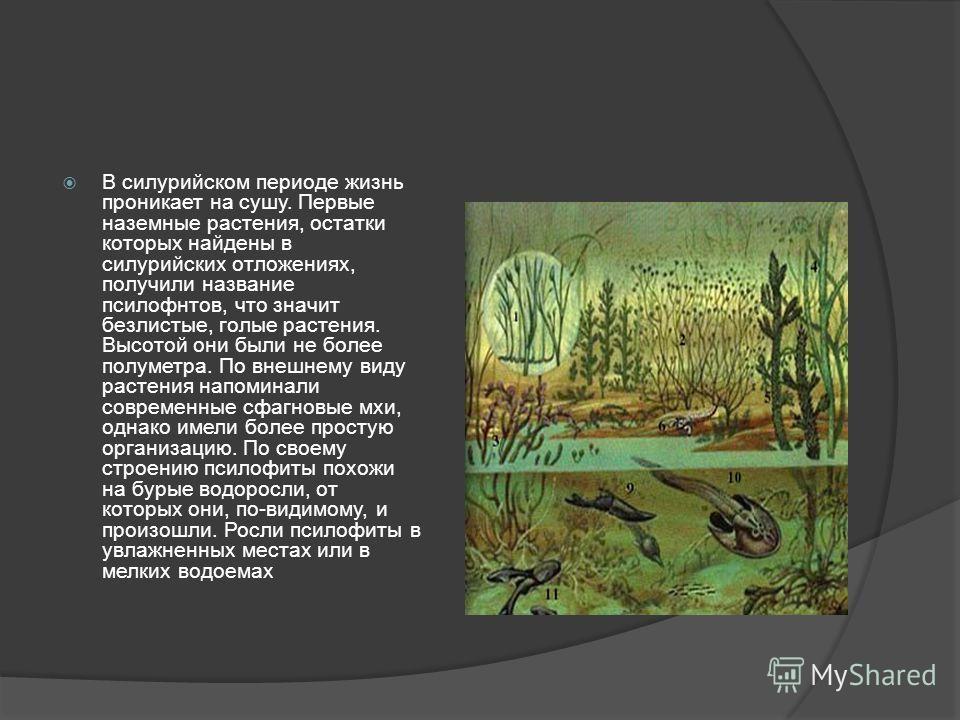 В силурийском периоде жизнь проникает на сушу. Первые наземные растения, остатки которых найдены в силурийских отложениях, получили название псилофнтов, что значит безлистые, голые растения. Высотой они были не более полуметра. По внешнему виду расте