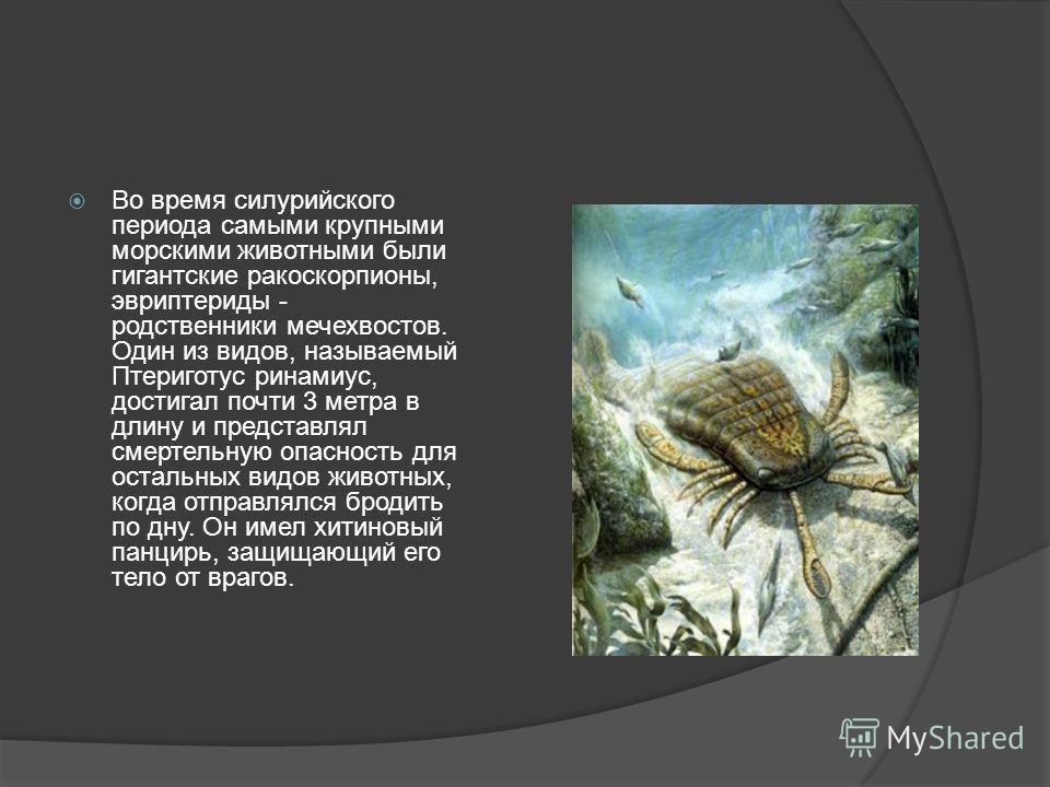 Во время силурийского периода самыми крупными морскими животными были гигантские ракоскорпионы, эвриптериды - родственники мечехвостов. Один из видов, называемый Птериготус ринамиус, достигал почти 3 метра в длину и представлял смертельную опасность
