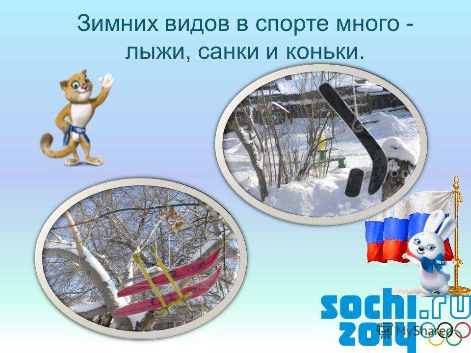 Зимних видов в спорте много - лыжи, санки и коньки.