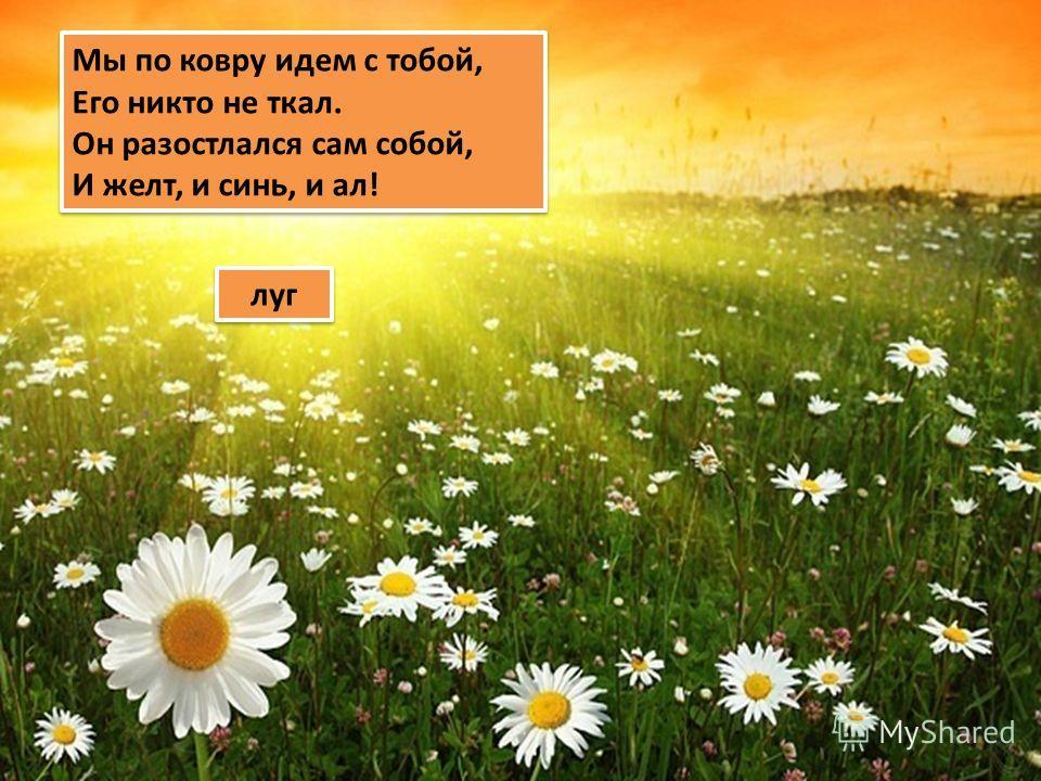 Мы по ковру идем с тобой, Его никто не ткал. Он разостлался сам собой, И желт, и синь, и ал! Мы по ковру идем с тобой, Его никто не ткал. Он разостлался сам собой, И желт, и синь, и ал! луг