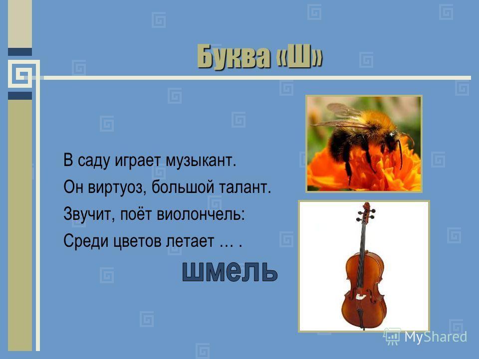 Буква «Ш» В саду играет музыкант. Он виртуоз, большой талант. Звучит, поёт виолончель: Среди цветов летает ….