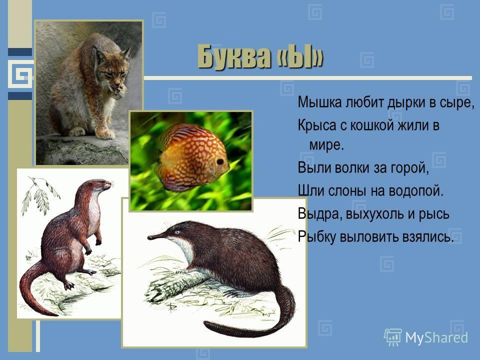 Буква «Ы» Мышка любит дырки в сыре, Крыса с кошкой жили в мире. Выли волки за горой, Шли слоны на водопой. Выдра, выхухоль и рысь Рыбку выловить взялись.