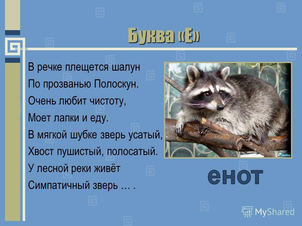 Буква «Е» В речке плещется шалун По прозванью Полоскун. Очень любит чистоту, Моет лапки и еду. В мягкой шубке зверь усатый, Хвост пушистый, полосатый. У лесной реки живёт Симпатичный зверь ….