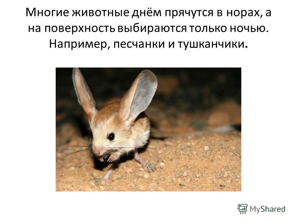 Многие животные днём прячутся в норах, а на поверхность выбираются только ночью. Например, песчанки и тушканчики.