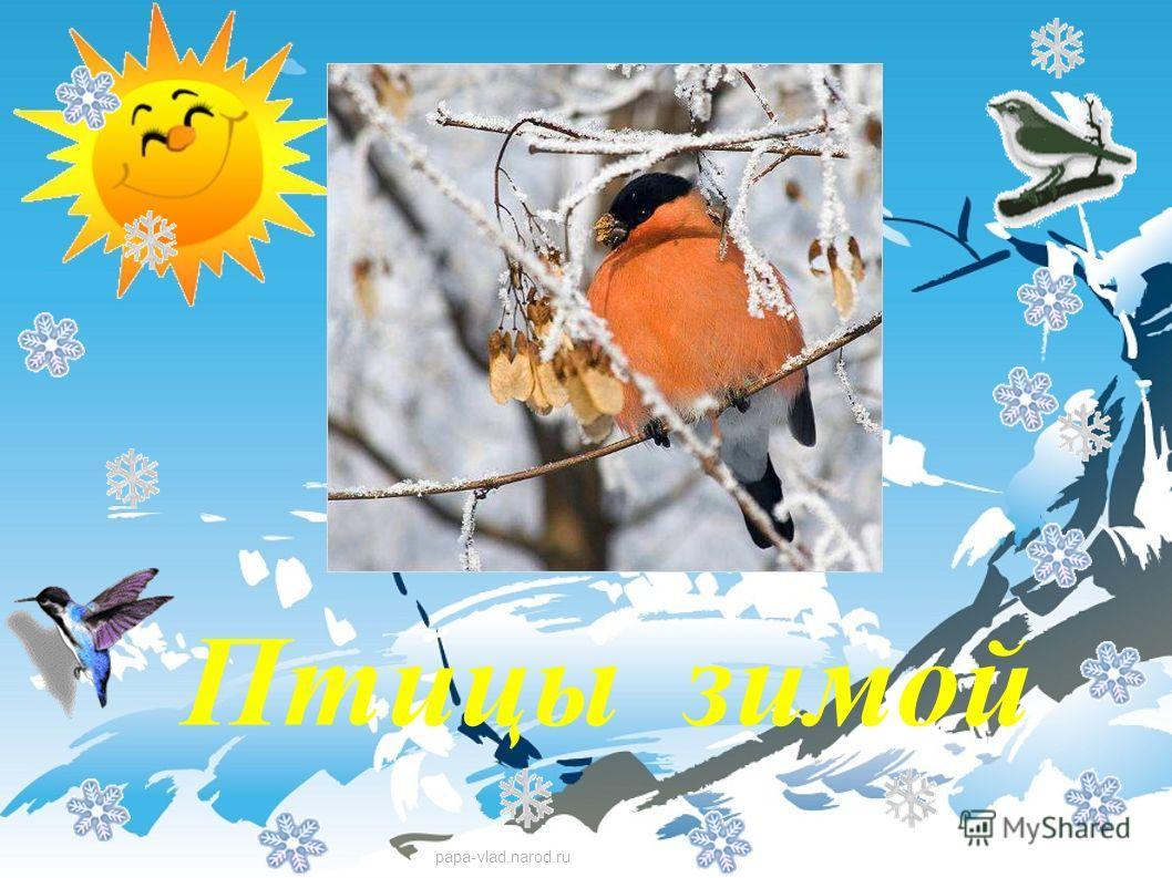 Картинки помоги птице зимой