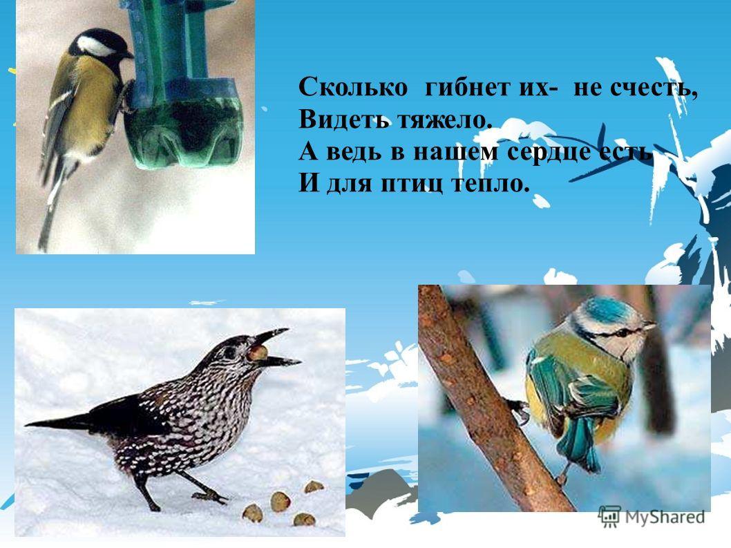 Сколько гибнет их- не счесть, Видеть тяжело. А ведь в нашем сердце есть И для птиц тепло. Сколько гибнет их- не счесть, видеть тяжело. А ведь в нашем сердце есть и для птиц тепло.