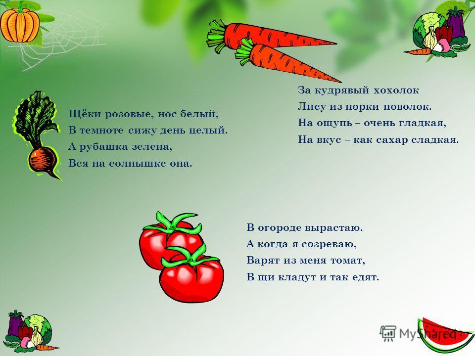 Щёки розовые, нос белый, В темноте сижу день целый. А рубашка зелена, Вся на солнышке она. За кудрявый хохолок Лису из норки поволок. На ощупь – очень гладкая, На вкус – как сахар сладкая. В огороде вырастаю. А когда я созреваю, Варят из меня томат,