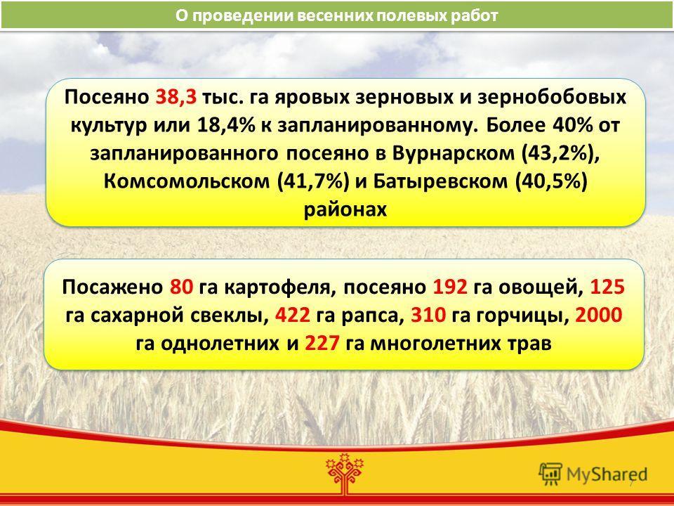 7 О проведении весенних полевых работ Посеяно 38,3 тыс. га яровых зерновых и зернобобовых культур или 18,4% к запланированному. Более 40% от запланированного посеяно в Вурнарском (43,2%), Комсомольском (41,7%) и Батыревском (40,5%) районах Посажено 8