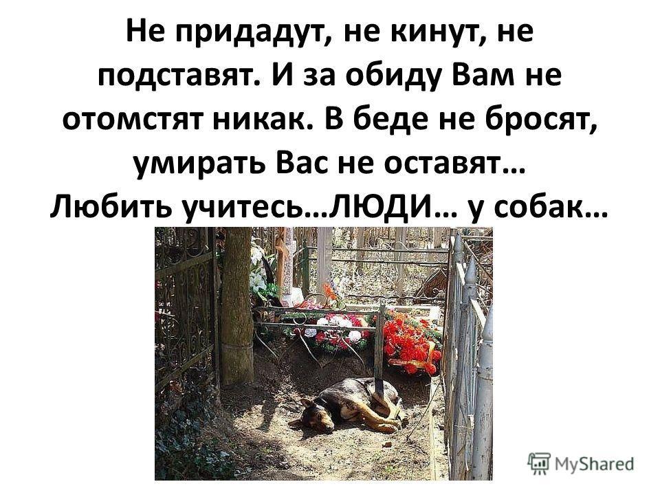 Не придадут, не кинут, не подставят. И за обиду Вам не отомстят никак. В беде не бросят, умирать Вас не оставят… Любить учитесь…ЛЮДИ… у собак…