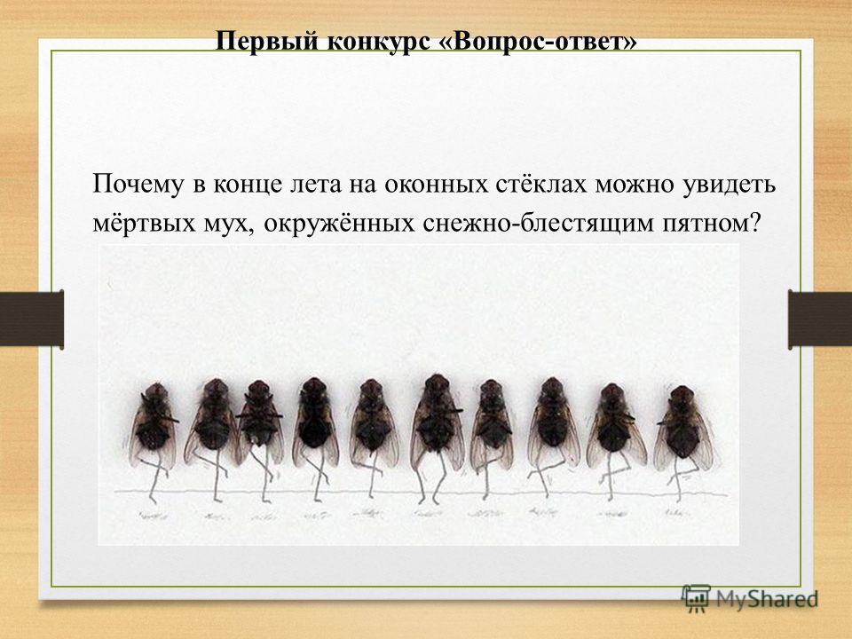 Первый конкурс «Вопрос-ответ» Почему в конце лета на оконных стёклах можно увидеть мёртвых мух, окружённых снежно-блестящим пятном?