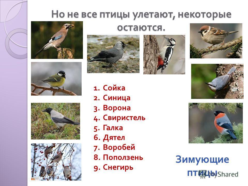 Но не все птицы улетают, некоторые остаются. 1.Сойка 2.Синица 3.Ворона 4.Свиристель 5.Галка 6.Дятел 7.Воробей 8.Поползень 9.Снегирь Зимующие птицы