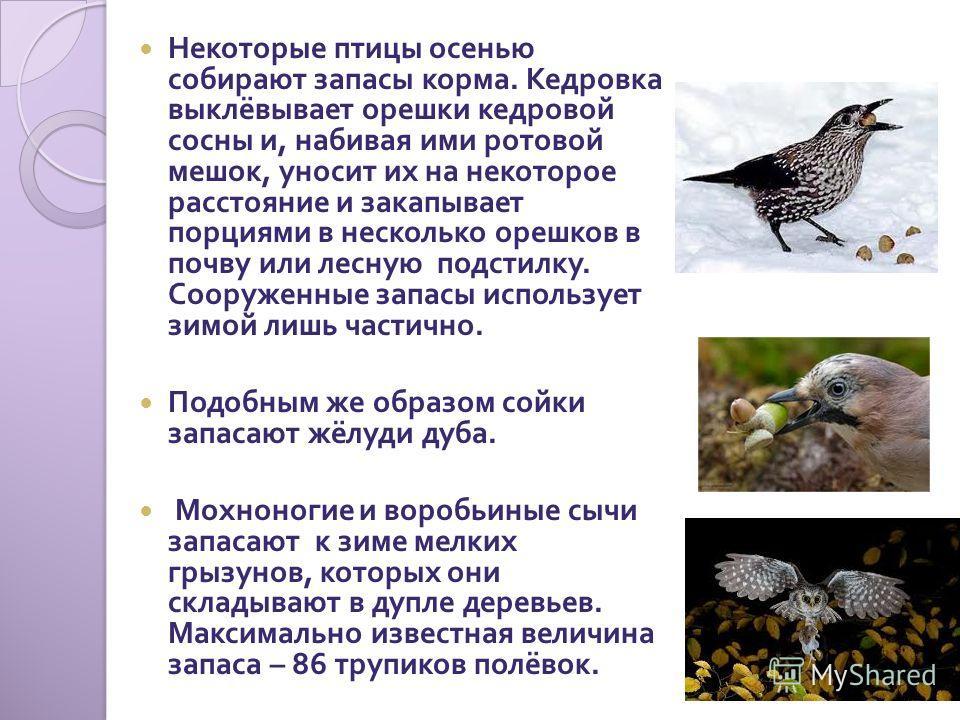 Некоторые птицы осенью собирают запасы корма. Кедровка выклёвывает орешки кедровой сосны и, набивая ими ротовой мешок, уносит их на некоторое расстояние и закапывает порциями в несколько орешков в почву или лесную подстилку. Сооруженные запасы исполь