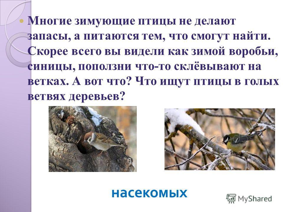 Многие зимующие птицы не делают запасы, а питаются тем, что смогут найти. Скорее всего вы видели как зимой воробьи, синицы, поползни что-то склёвывают на ветках. А вот что? Что ищут птицы в голых ветвях деревьев? насекомых