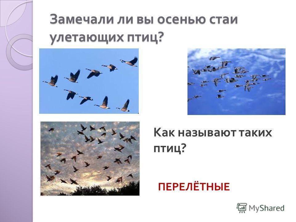 Замечали ли вы осенью стаи улетающих птиц ? Как называют таких птиц ? ПЕРЕЛЁТНЫЕ